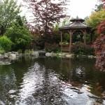 Koi Pond_Spring-06