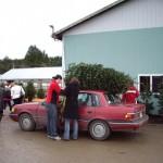 Pine Meadows - loading tree on a car IMGP1932