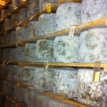Wall of Cheddars