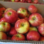 apples in box - Willow View