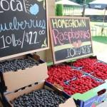 berries in baskets july 2012 009