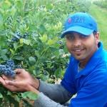 blueberries being held by man 103_2514