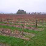 blueberry field winter