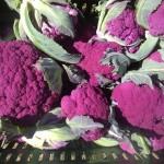 cauliflower, purple IMG_0376