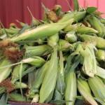 corn, sweet in pile july 2012 025 (2)