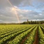 farm scence rainbow over farm 2013