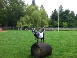 goat on a barrel IMG_0307