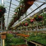 port kells nurseries greenhouse
