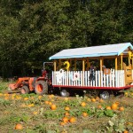 port kells nurseries pumpkin patch (3)