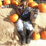 port kells nurseries pumpkin patch (4)