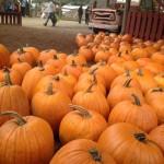 pumpkins ground close