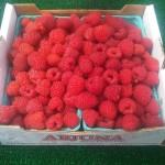 raspberries flat