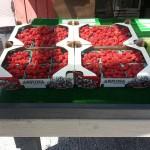 raspberries in flats