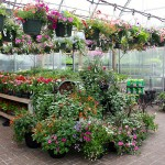 BC Local Garden Store and Nursery