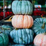 pumpkins-blue-doll-proceline-doll-queenlsland-blue