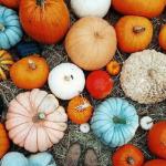 pumpkins-asst-oct-2016